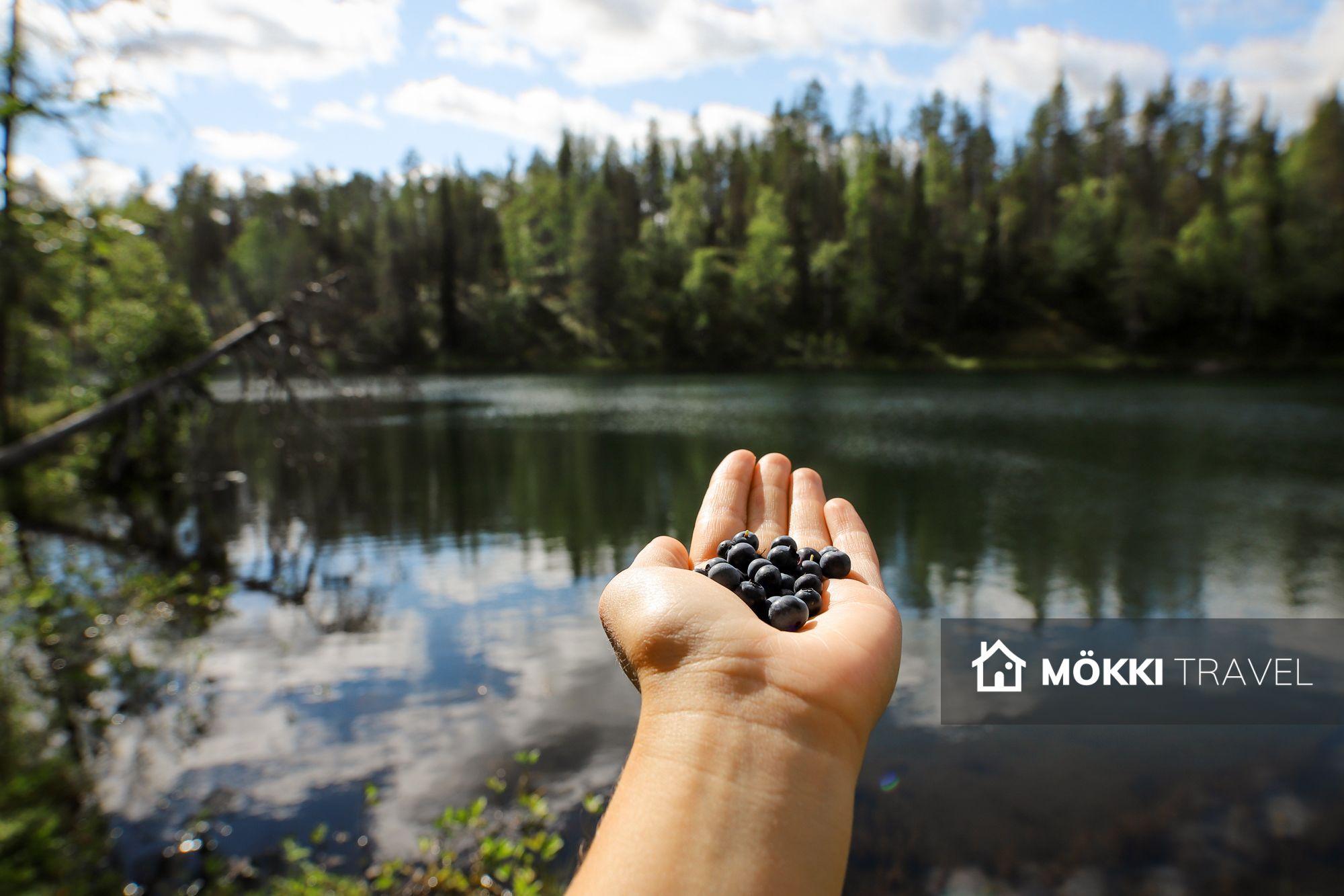 bilberries in de hand bij Oulanka